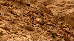 """""""green pastures"""" in the Negev"""
