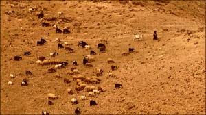"""my sheep hear my voice"""