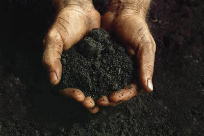 Hands Holding Soil --- Image by © L. Clarke/Corbis