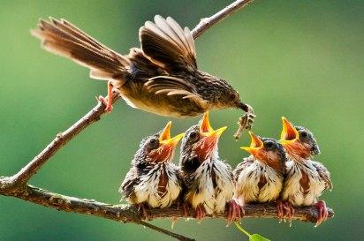 mention FIAP   KU Min-Sheng   TAIWAN   Feeding Baby Birds 1